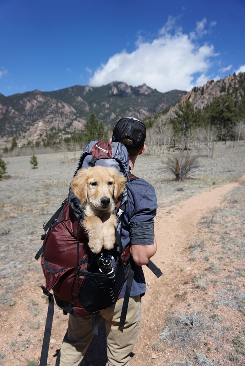 support dog in backpack on hike