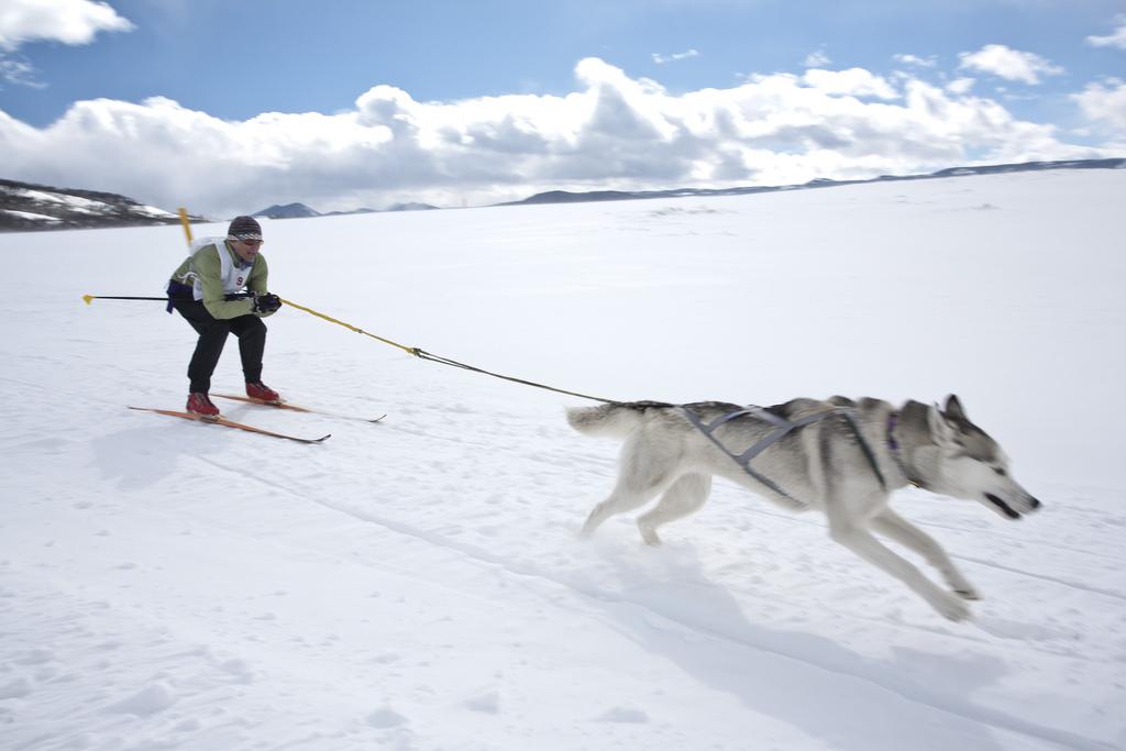 Skijoring Bend
